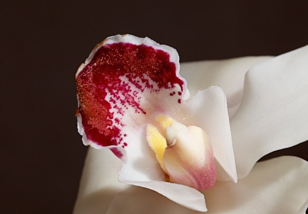 canstockphoto2776012 white orchid